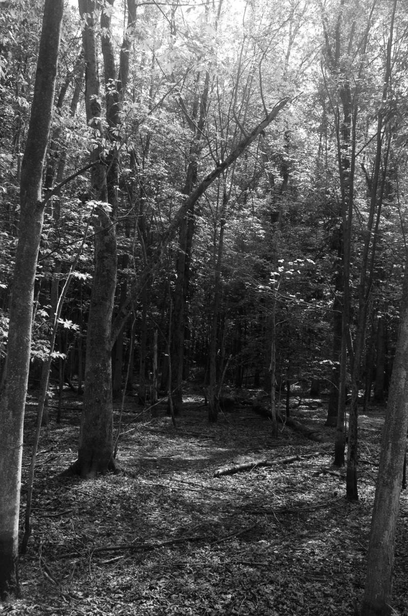 Barren Swamp