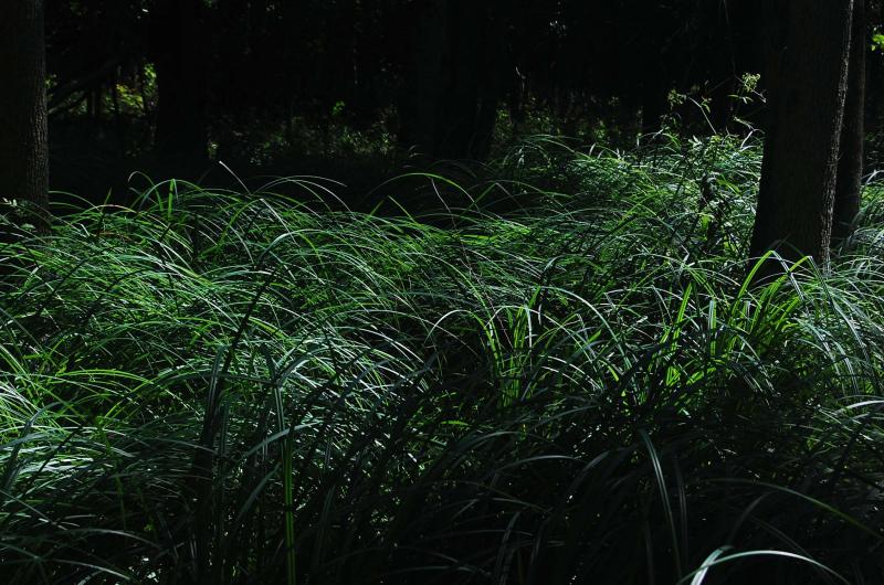 Grasses 4