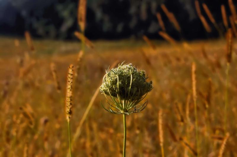 Grasses4-Final