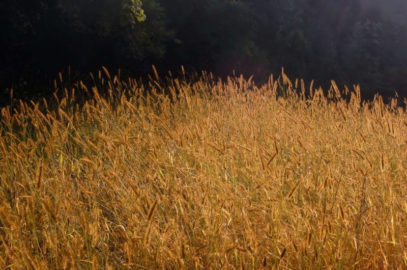 Grasses1-Final